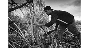 Image is a man working in a field